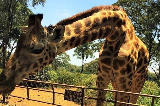 David Sheldrick, Giraffe Centre and Bomas of Kenya Full-Day Tour from Nairobi photo 2