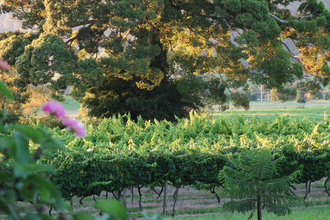 Elite Luxury Series - Full Day Private Tour - South Coast & Shoalhaven Wineries