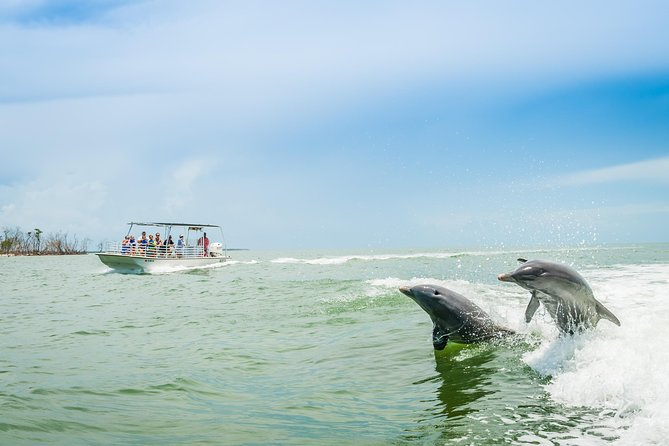 Marco Island Dolphin-Watching Tour photo 7