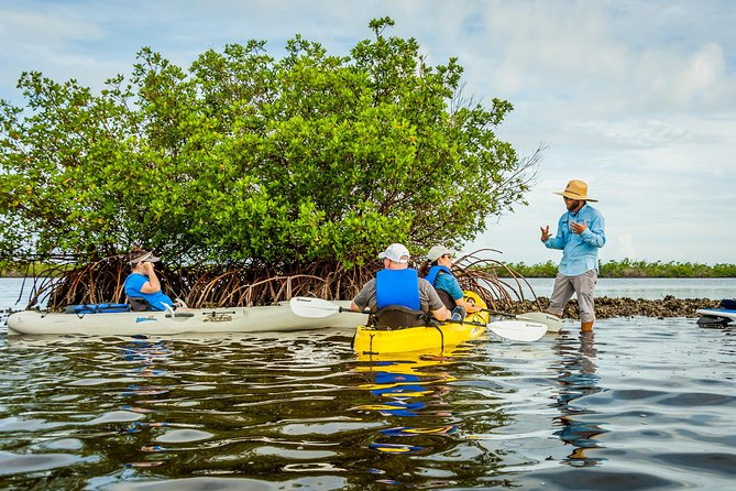 Shared 2 hours Rookery Bay Reserve Kayak Ecotour in Naples