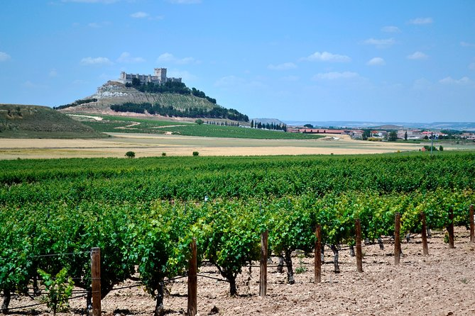 Premium Ribera del Duero wine tour with lunch & hotel pick-up