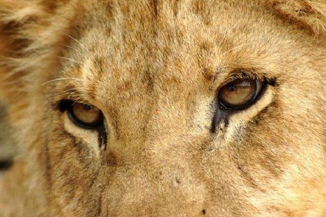 Excursão de meio dia ao Lion Park