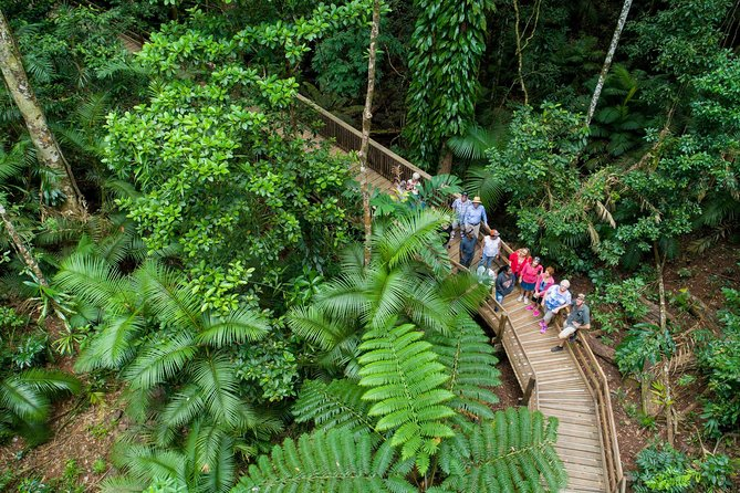Cape Tribulation, Daintree River Cruise and Bloomfield Track Small Group Tour