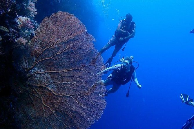 3 Day Dive Tour with Free Jellyfish Lake Tour