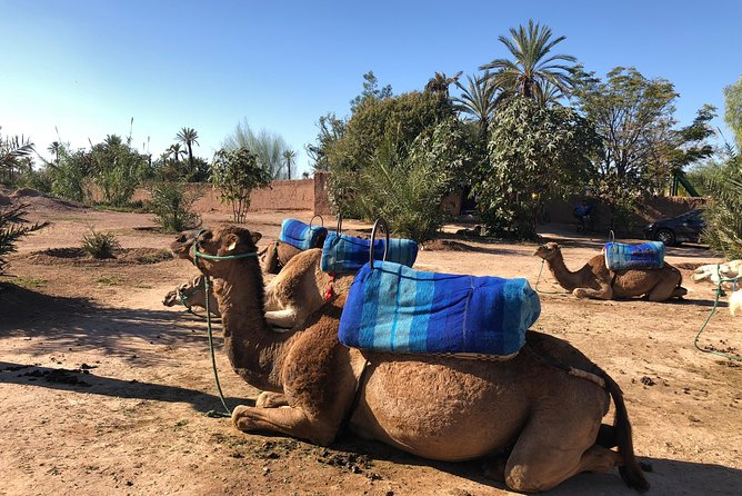 Camel Ride Experience - With a drive at The Palmeraie Oasis