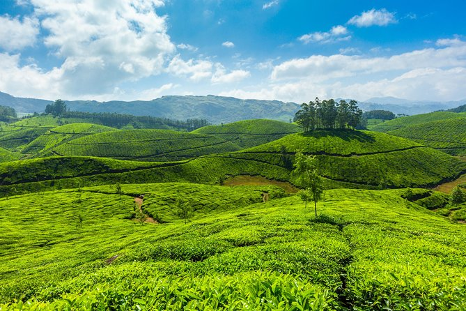 Hill and Backwater Tour at God's Own Country, Kerala