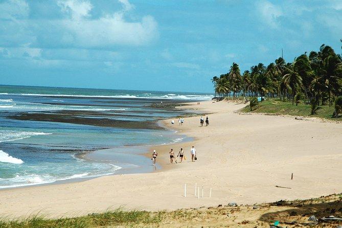 Viagem de um dia na Praia do Forte e Guarajuba