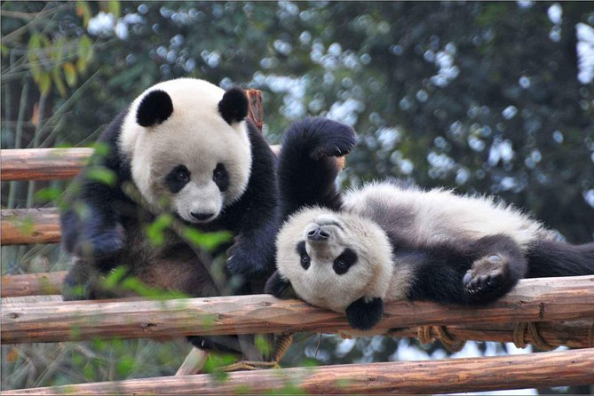 Chengdu Giant Panda Breeding Research Base Admission Ticket