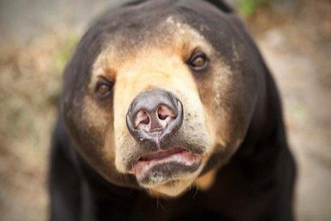 Free the Bears at Phnom Tamao