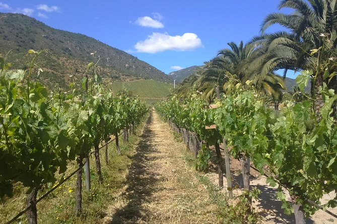 full day private wine tour casablanca valley from Santiago