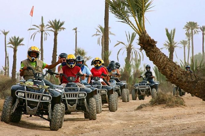 Quad bike and camel ride in the palm grove