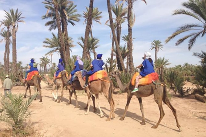 Marrakech Camel Ride Experience with Pick-up