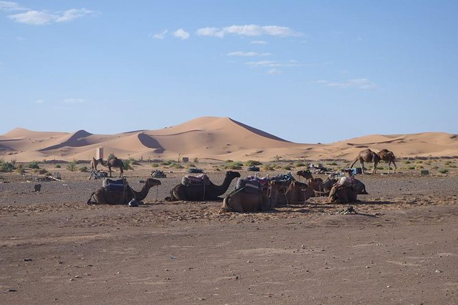 Day tour to Draa valley & Zagora Desert & camel ride departure from Ouarzazate