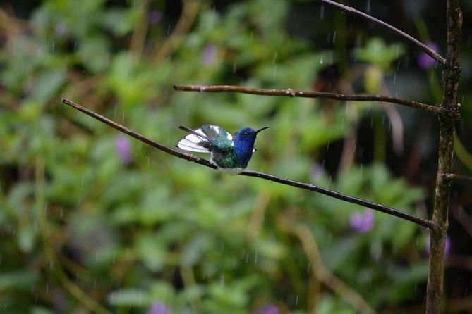 Trinidad Nature und Asa Wright Centre Ganztagesausflug von Port of Spain