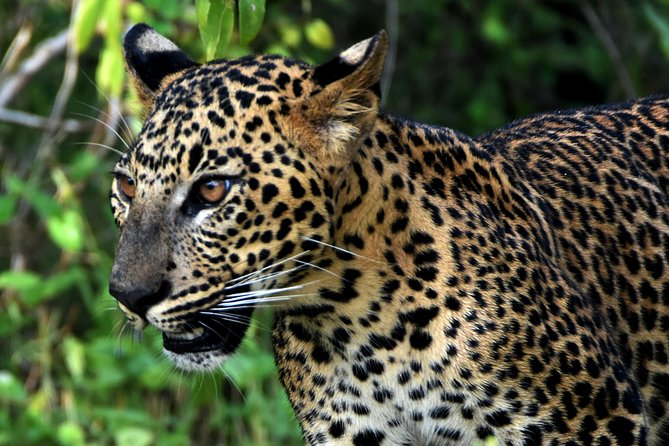 Private Tour : YALA National Park with Experienced Driver and Guide