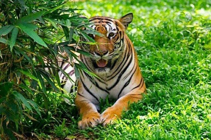 Dagstur till Bannerghatta Biological Park från Bengaluru