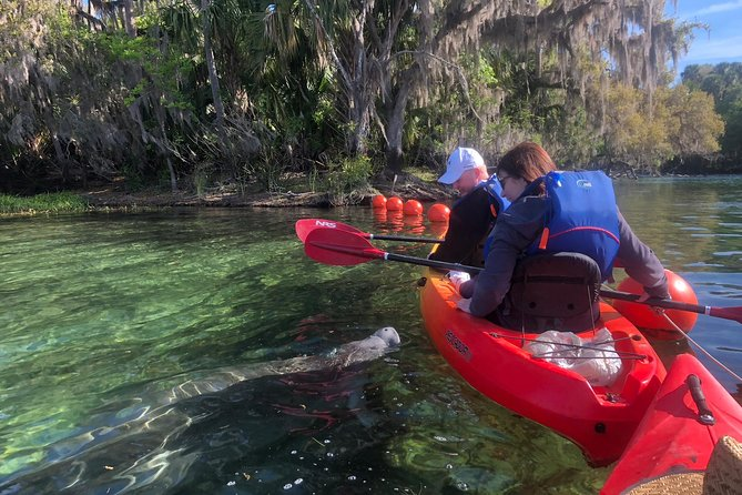 Recorrido en kayak con manatíes en Blue Springs State Park
