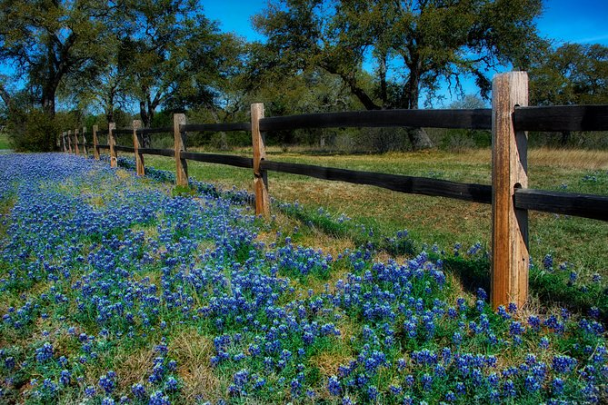 Texas Hill Country and LBJ Ranch Tour with Wine Tasting Options photo 2