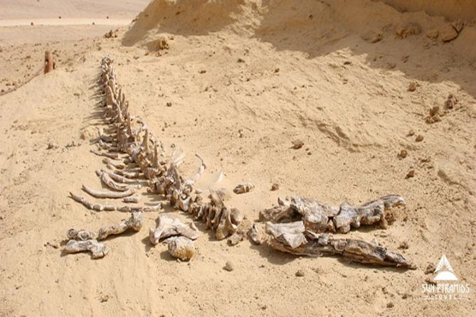 Private Day Tour to El Fayoum from Cairo photo 2