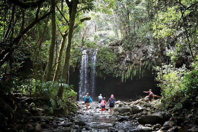 Waterfall & Rainforest Hiking Adventure with Hotel Pickup