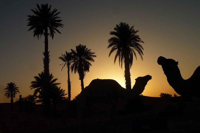 Sunset Camel Ride with tea break in the Palm Grove of Marrakech