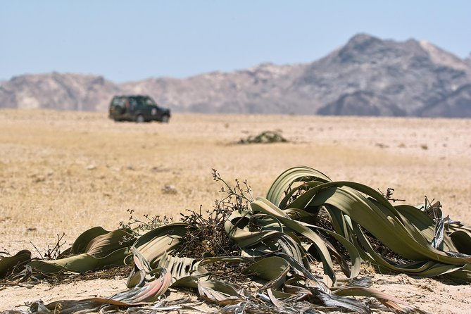 Moon Landscape and Welwitschia Off-Road Half-Day Tour from Walvis Bay photo 15