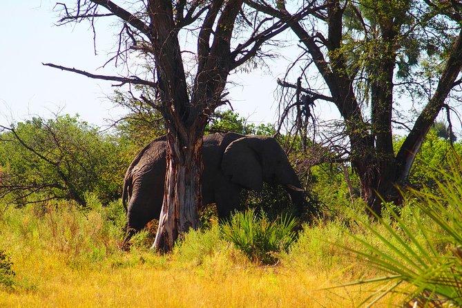 7 Days Livingstone & South Luangwa Tour