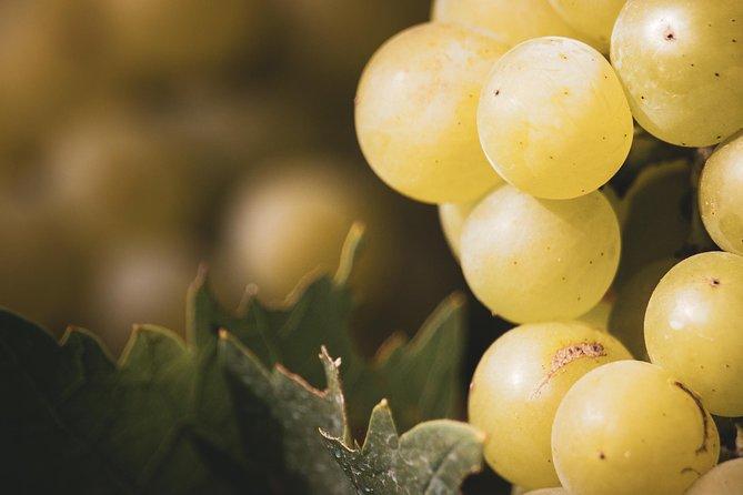 Luján Deluxe: cata de vino prémium con almuerzo gourmet, Mendoza, ARGENTINA
