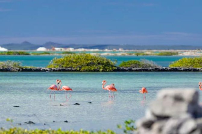 Flamingos at Bonaire Salt Flats