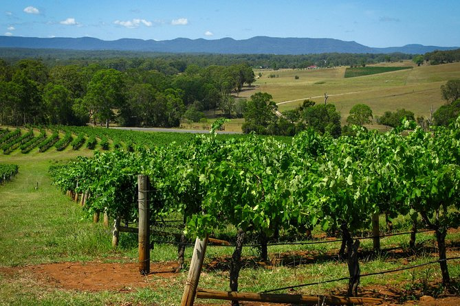 Private Luxury Tour: Hunter Valley Wineries with Cheese, Chocolate, Gourmet Food