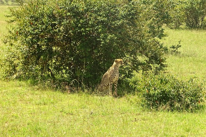4-Day Masai Mara - Lake Nakuru Safari (Small group) photo 15