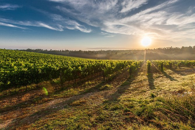 Frascati Wineyard Wine Tasting tour from Rome with Private Transfer
