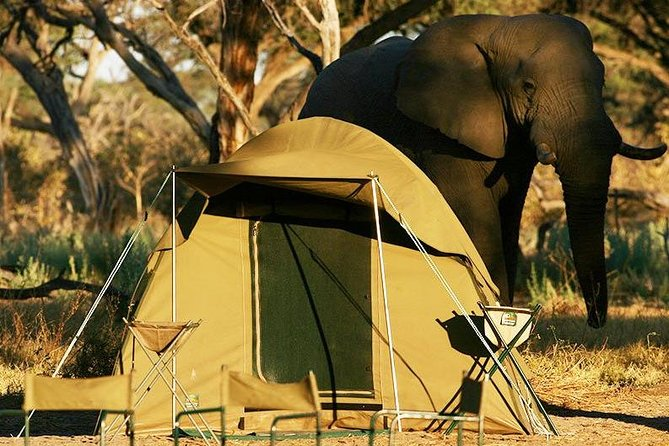 2-Day Camping Safari in Chobe National Park from Victoria Falls photo 7