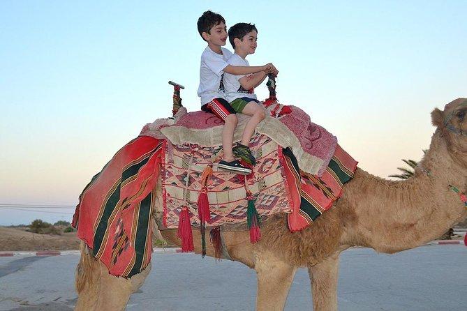 Dubai 30 Mins Quad Bike Desert Drive & Safari - Morning