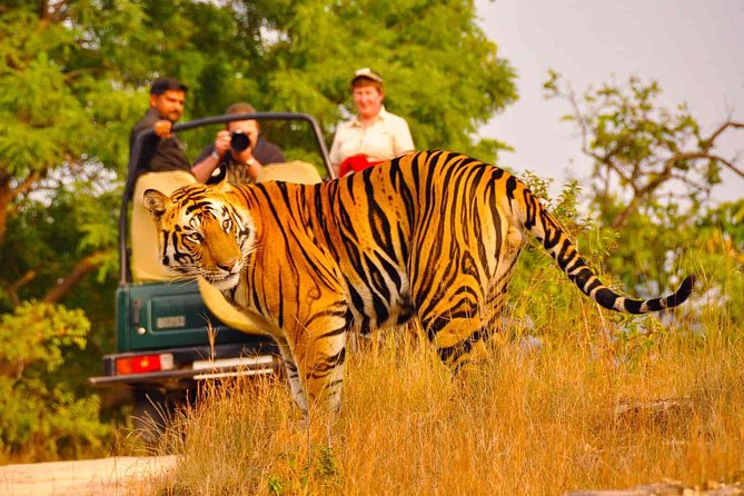 Private Golden Triangle Delhi Agra Jaipur with Ranthambore
