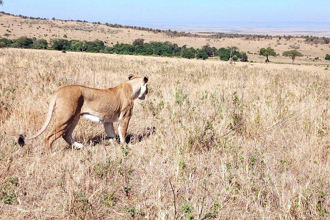 Lake Manyara, Serengeti and Ngorongoro crater 4 days safari from Arusha town