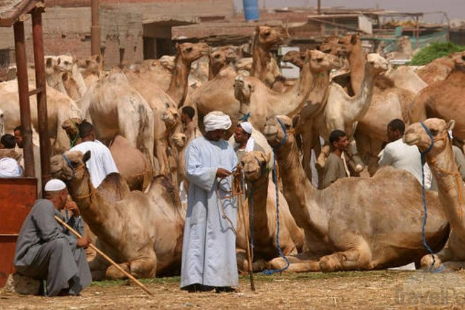 Private Camel market day tour in Cairo