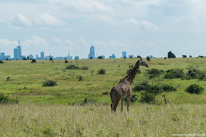 Day Tour of Nairobi National Park and Area Wildlife Refuges