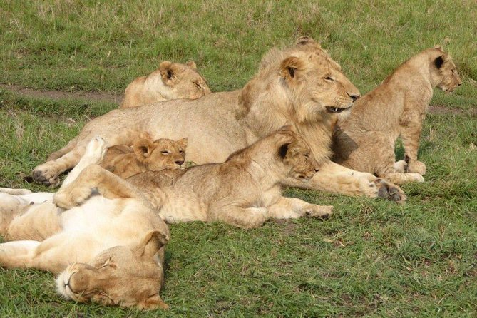 Nairobi National Park Daily Private Tour Min 2 Pax