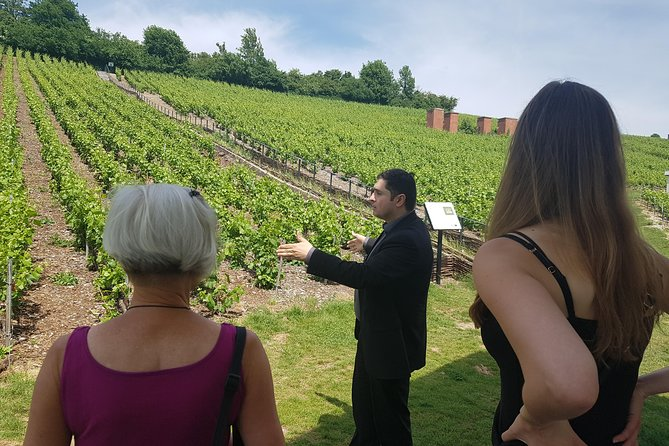 Taste champagne with a winemaker and visit his cellar. photo 9