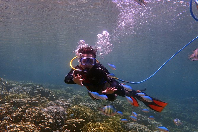 Freedom Diving- Enjoy Diving Without All The Gear!