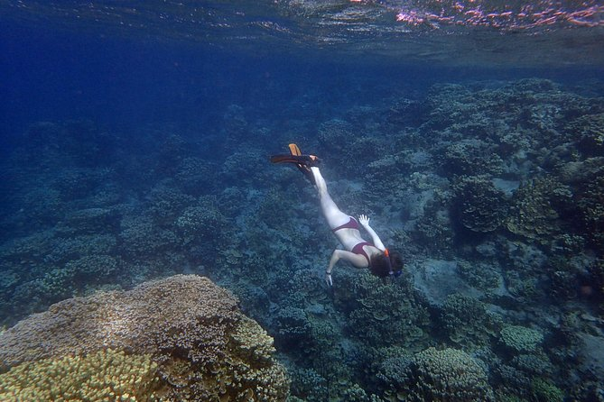 Take that First Step to Learn Freediving!