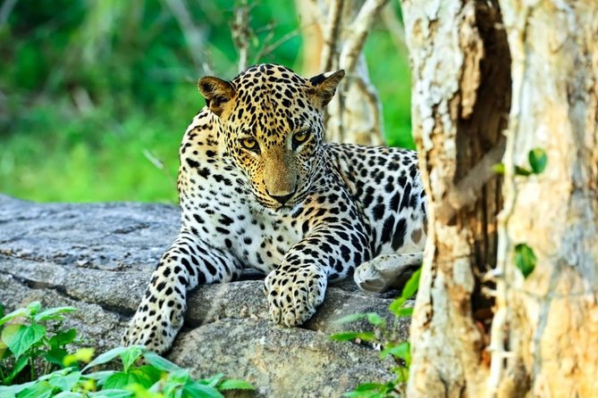 Private Day Tour: Yala National Park Safari from Hikkaduwa