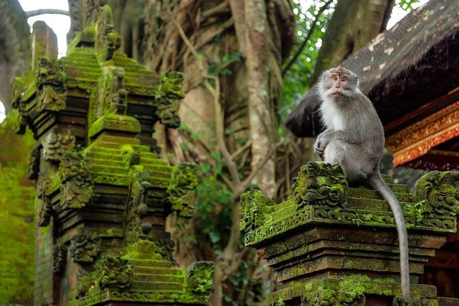 Private Ubud Day Tour (with Visits to Traditional Villages and Rice Fields)