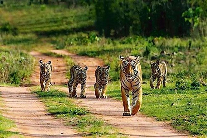RANTHAMBHORE TOUR WITH ONE RIDE OF JUNGLE BY GYPSY