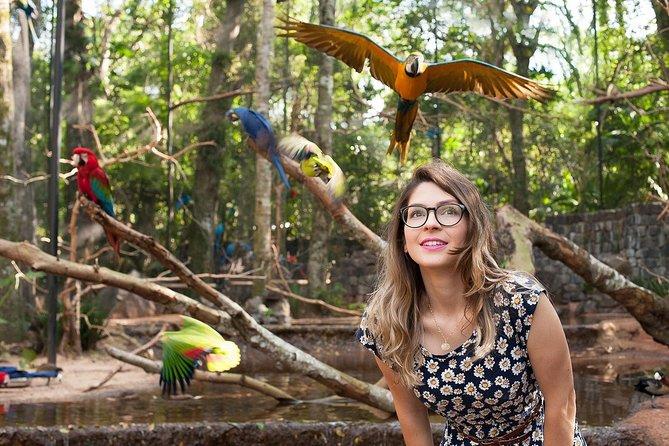 Bird Park & Iguassu Brazilian Side From Puerto Iguazú Hotels - Private Tour