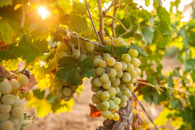 Cinque Terre Wine Tour in Manarola