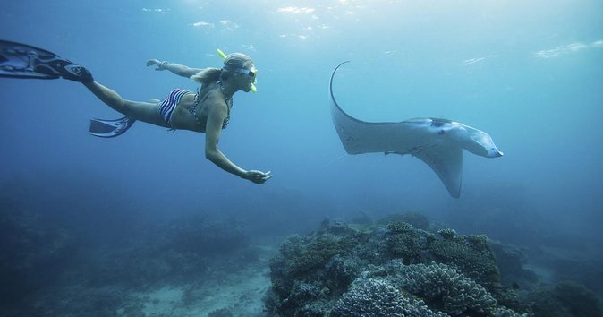 From Bali: Hunting Manta Rays in Nusa Penida and lembongan island