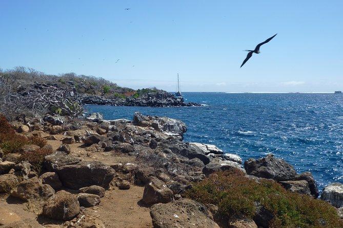 North Seymour Day Trip Galapagos: Snorkeling & Hiking Trip