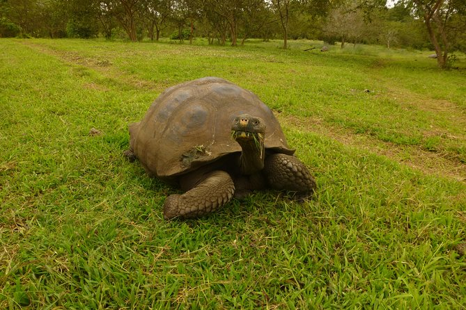 Skip the Line:El Chato 2 Reserve Admission Ticket in Santa Cruz Island,Galapagos